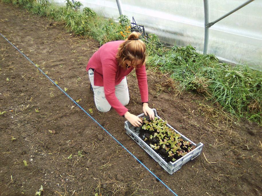 image d'illustration de l'article Préparation légumes d'hiver